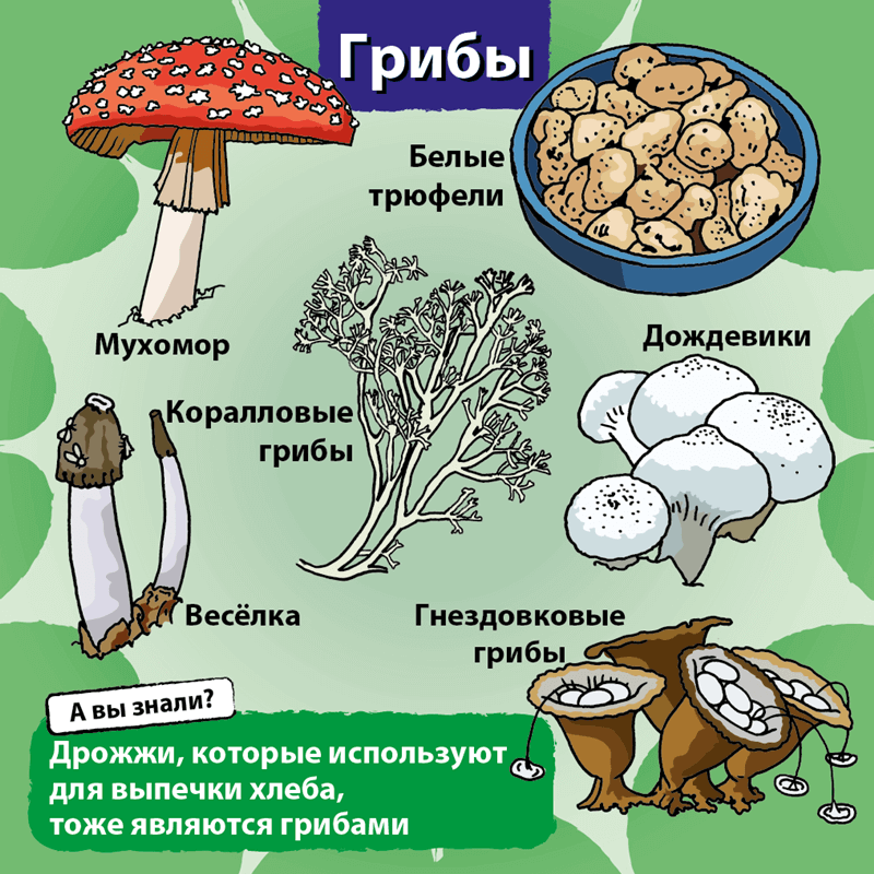 Сундучок Знаний: Природа