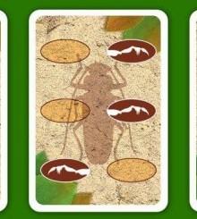 Гонки жуков